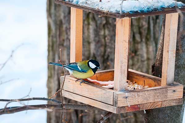 Чертежи кормушек для птиц