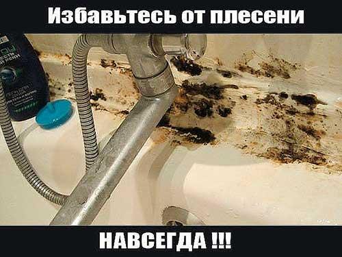 Черная плесень в ванной как избавиться
