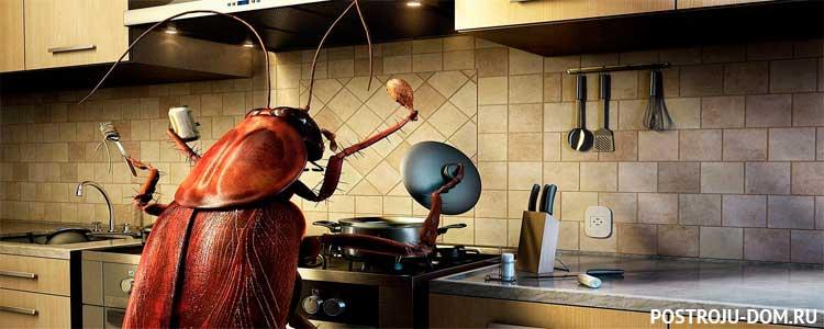 Как уничтожить тараканов в частном доме