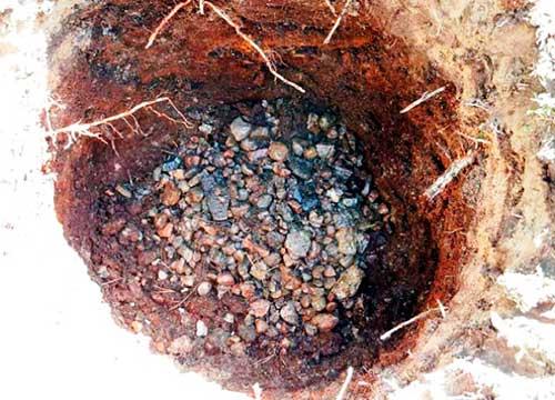 Подготовка ямы и высадка саженца